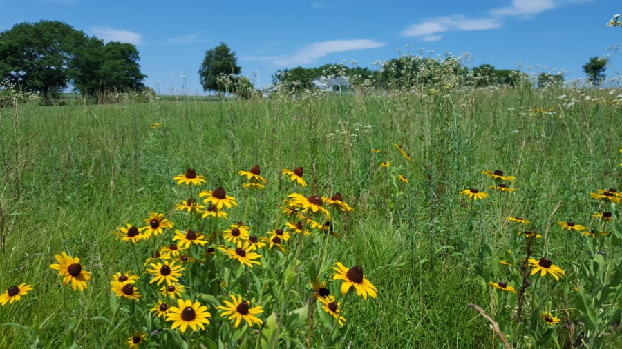 natural meadow